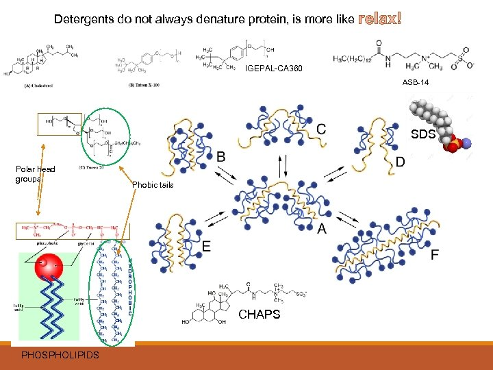 Detergents do not always denature protein, is more like relax! IGEPAL-CA 360 ASB-14 SDS