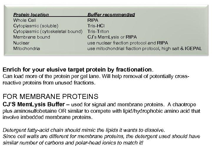 Protein location Whole Cell Cytoplasmic (soluble) Cytoplasmic (cytoskeletal bound) Membrane bound Nuclear Mitochondria Buffer