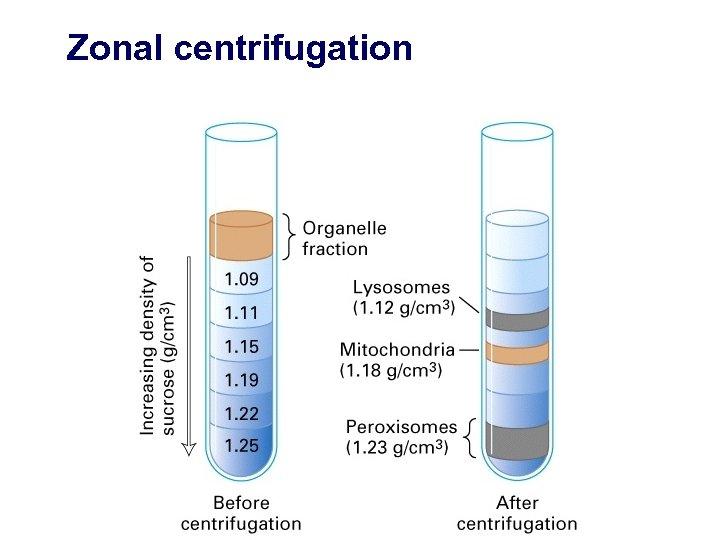Zonal centrifugation