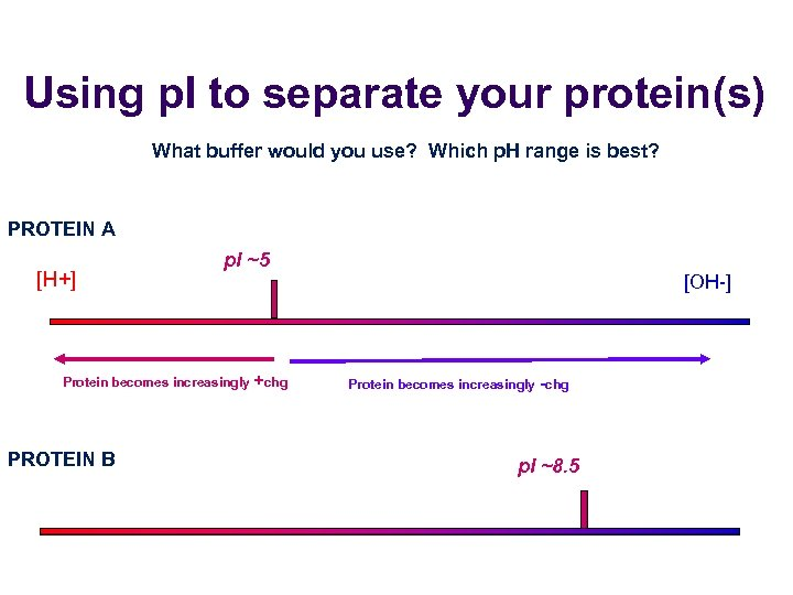 Using p. I to separate your protein(s) What buffer would you use? Which p.