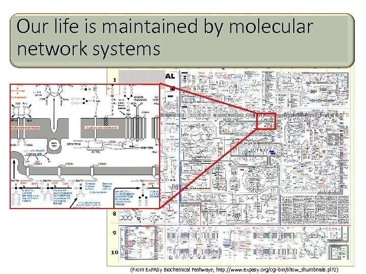 Our life is maintained by molecular network systems (From Ex. PASy Biochemical Pathways; http: