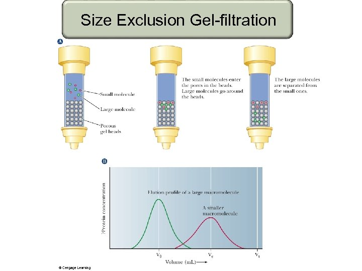 Size Exclusion Gel-filtration