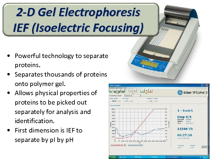 2 -D Gel Electrophoresis IEF (Isoelectric Focusing) • Powerful technology to separate proteins. •