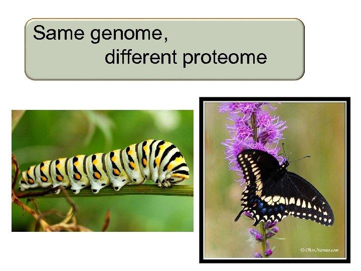 Same genome, different proteome