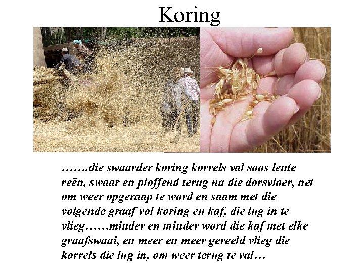 Koring ……. die swaarder koring korrels val soos lente reën, swaar en ploffend terug