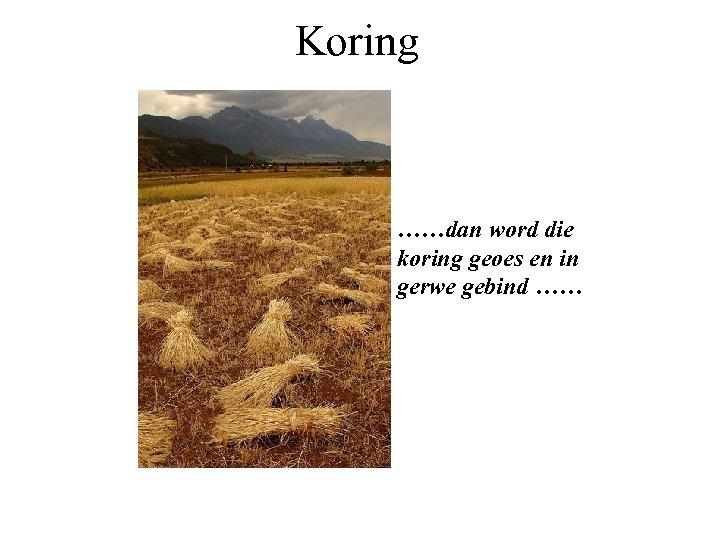 Koring ……dan word die koring geoes en in gerwe gebind ……