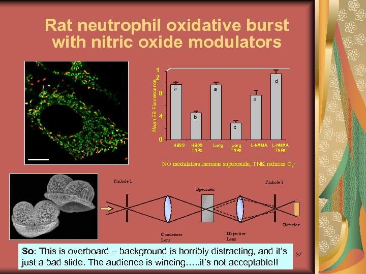 Rat neutrophil oxidative burst with nitric oxide modulators Mean EB Fluorescence 1 2 d