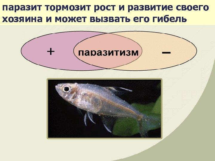 паразит тормозит рост и развитие своего хозяина и может вызвать его гибель