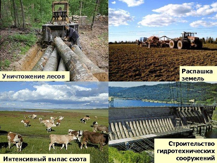 Уничтожение лесов Интенсивный выпас скота Распашка земель Строительство гидротехнических сооружений