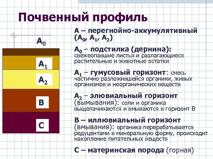 Почвенный профиль А 0 А 1 А 2 А – перегнойно-аккумулятивный (А 0, А