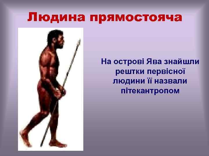 Людина прямостояча На острові Ява знайшли рештки первісної людини її назвали пітекантропом