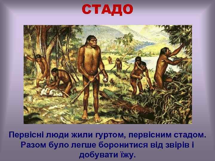 СТАДО Первісні люди жили гуртом, первісним стадом. Разом було легше боронитися від звірів і