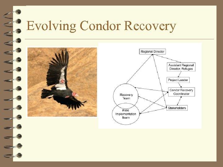 Evolving Condor Recovery