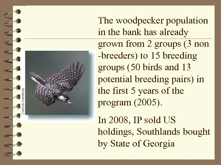 The woodpecker population in the bank has already grown from 2 groups (3 non