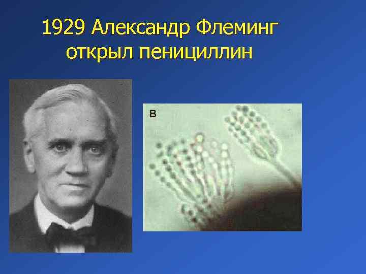 1929 Александр Флеминг открыл пенициллин