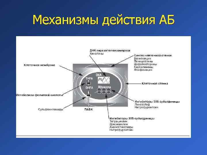 Механизмы действия АБ
