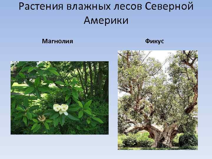 растения северной америки список с фото исследователи