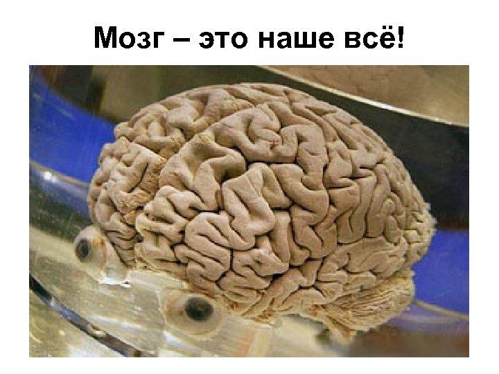 Мозг – это наше всё!