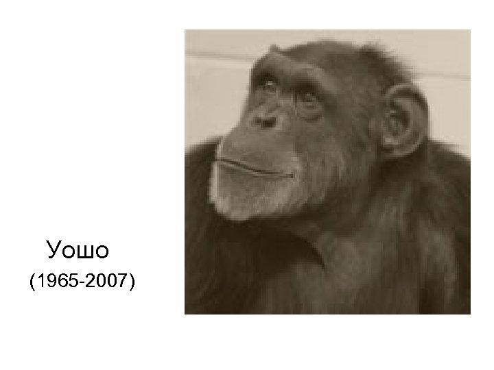Уошо (1965 -2007)