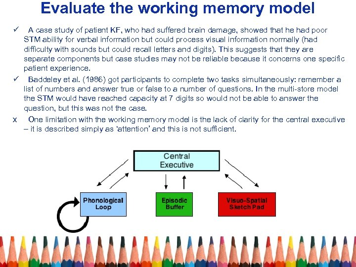 Evaluate the working memory model ü A case study of patient KF, who had