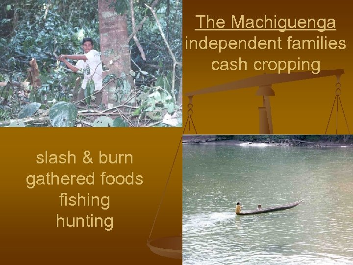 The Machiguenga independent families cash cropping slash & burn gathered foods fishing hunting