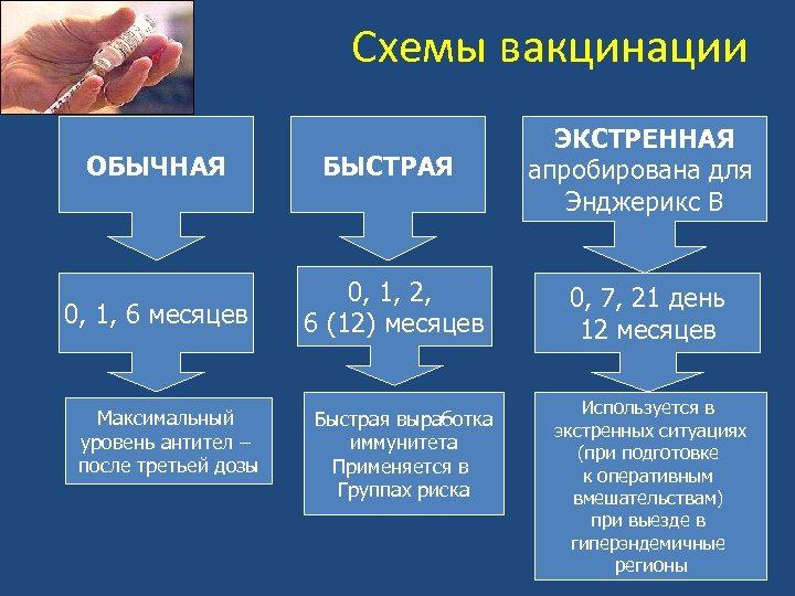 Схемы вакцинации ОБЫЧНАЯ БЫСТРАЯ ЭКСТРЕННАЯ апробирована для Энджерикс В 0, 1, 6 месяцев