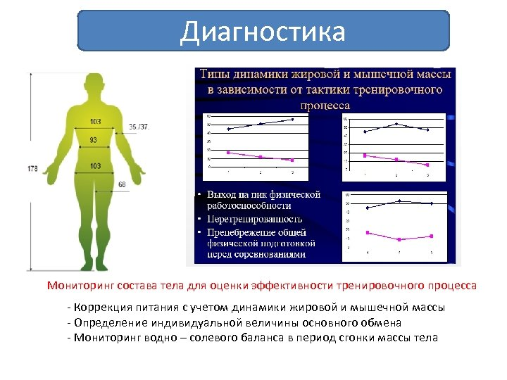 Диагностика Мониторинг состава тела для оценки эффективности тренировочного процесса - Коррекция питания с учетом