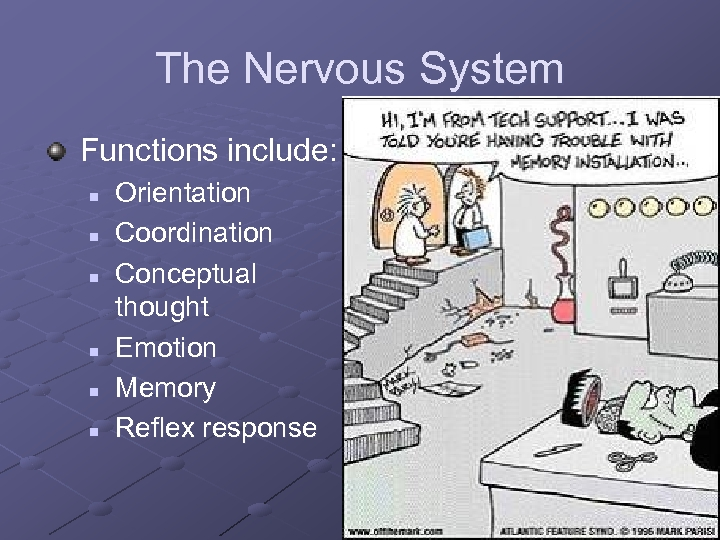 The Nervous System Functions include: n n n Orientation Coordination Conceptual thought Emotion Memory