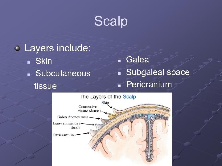 Scalp Layers include: n n Skin Subcutaneous tissue n n n Galea Subgaleal space
