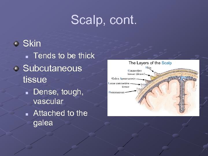 Scalp, cont. Skin n Tends to be thick Subcutaneous tissue n n Dense, tough,