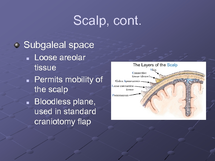 Scalp, cont. Subgaleal space n n n Loose areolar tissue Permits mobility of the
