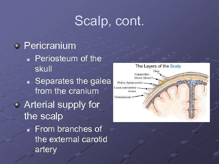 Scalp, cont. Pericranium n n Periosteum of the skull Separates the galea from the