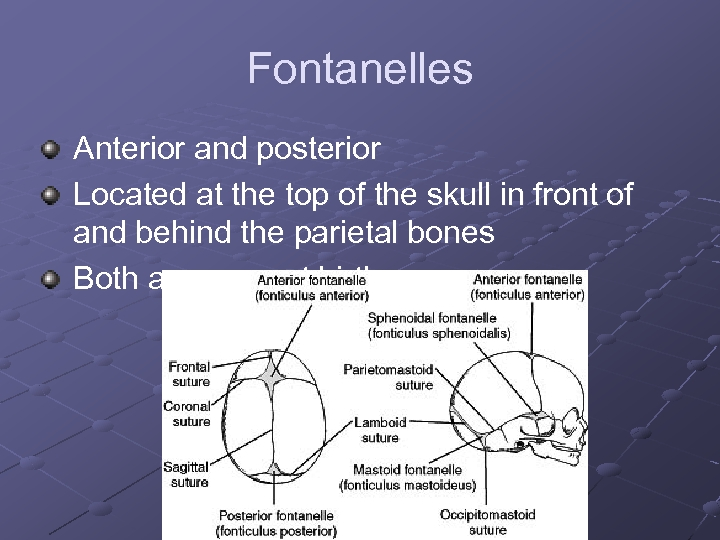 Fontanelles Anterior and posterior Located at the top of the skull in front of