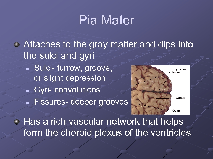 Pia Mater Attaches to the gray matter and dips into the sulci and gyri