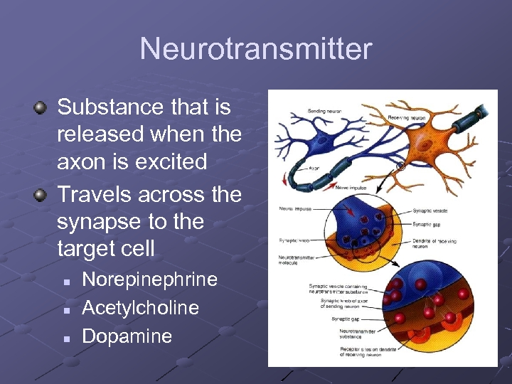 Neurotransmitter Substance that is released when the axon is excited Travels across the synapse