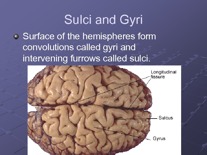 Sulci and Gyri Surface of the hemispheres form convolutions called gyri and intervening furrows