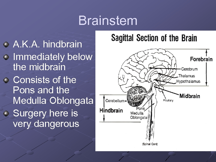 Brainstem A. K. A. hindbrain Immediately below the midbrain Consists of the Pons and