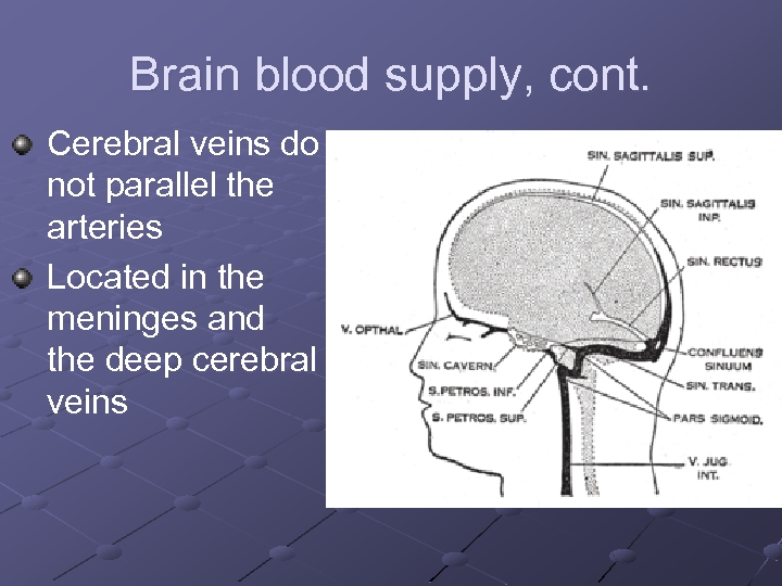 Brain blood supply, cont. Cerebral veins do not parallel the arteries Located in the