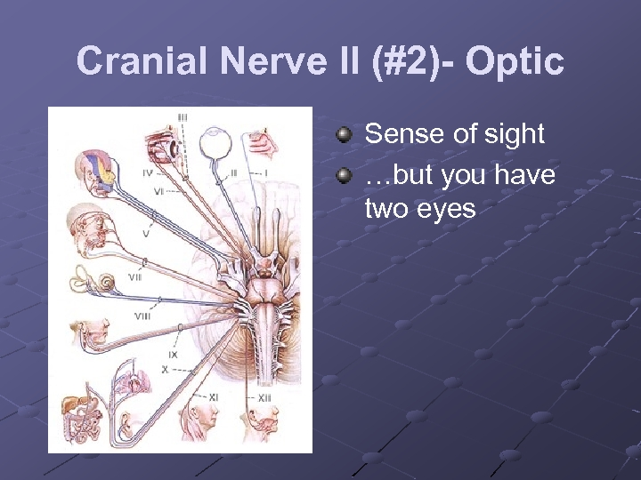 Cranial Nerve II (#2)- Optic Sense of sight …but you have two eyes