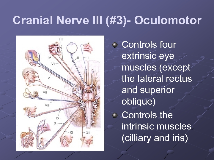Cranial Nerve III (#3)- Oculomotor Controls four extrinsic eye muscles (except the lateral rectus