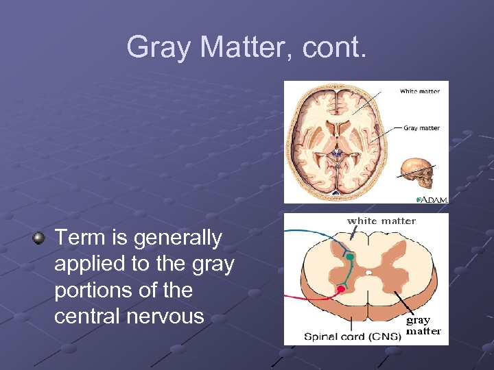 Gray Matter, cont. Term is generally applied to the gray portions of the central