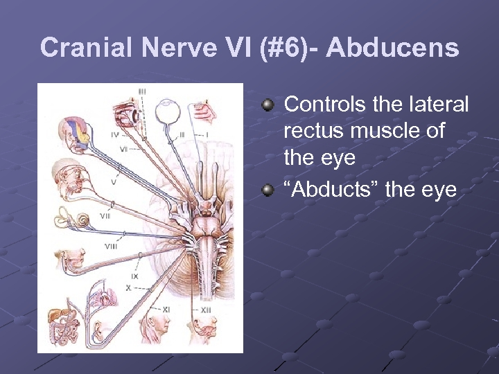 """Cranial Nerve VI (#6)- Abducens Controls the lateral rectus muscle of the eye """"Abducts"""""""