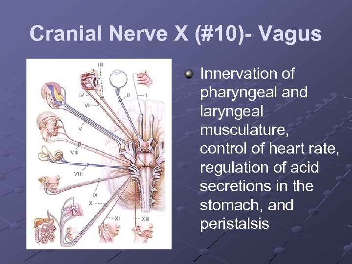 Cranial Nerve X (#10)- Vagus Innervation of pharyngeal and laryngeal musculature, control of heart