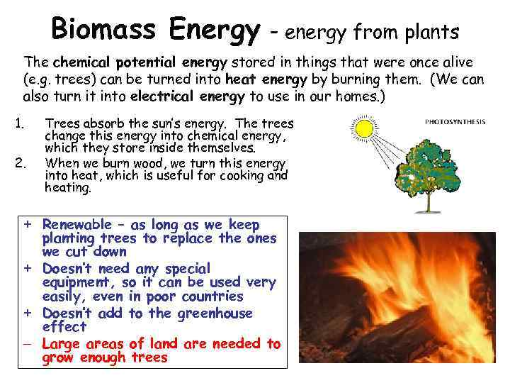 Biomass Energy – energy from plants The chemical potential energy stored in things that