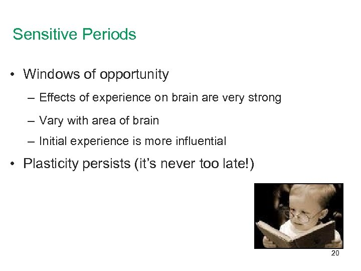 Sensitive Periods • Windows of opportunity – Effects of experience on brain are very