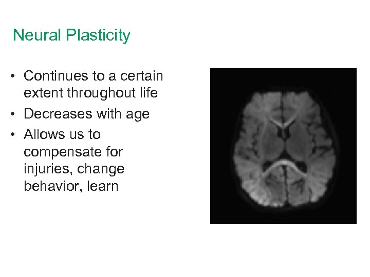 Neural Plasticity • Continues to a certain extent throughout life • Decreases with age