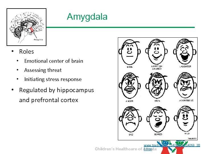 Amygdala • Roles • Emotional center of brain • Assessing threat • Initiating stress