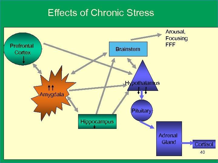 Effects of Chronic Stress Prefrontal Cortex Arousal, Focusing FFF Brainstem Hypothalamus Amygdala Pituitary Hippocampus
