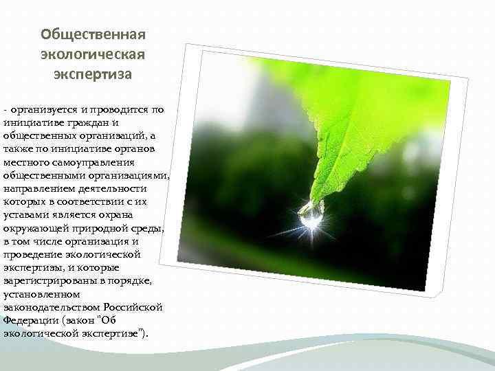 Общественная экологическая экспертиза организуется и проводится по инициативе граждан и общественных организаций, а также