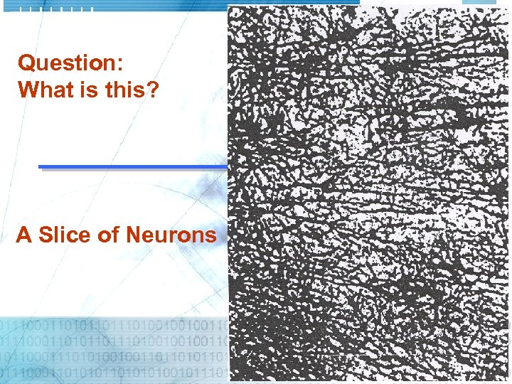 Question: What is this? A Slice of Neurons